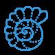 icons8-sea-shell-240